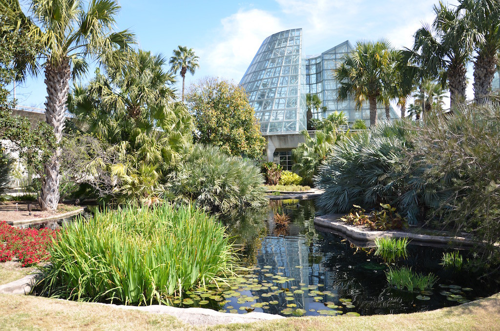 Serene lily pond