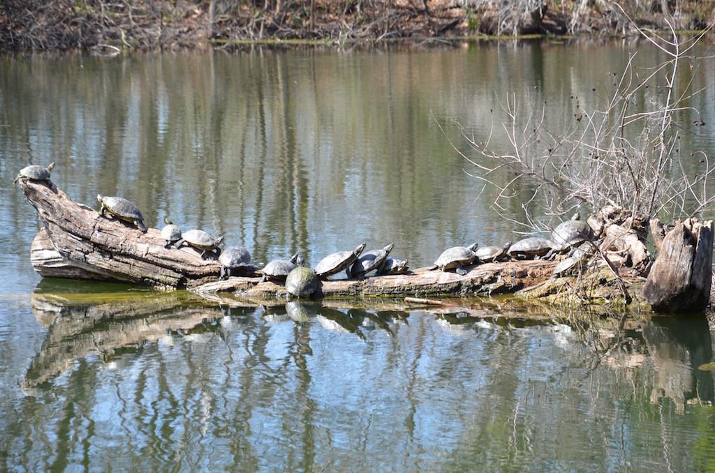 Turtlefest! Count 'em, 17!