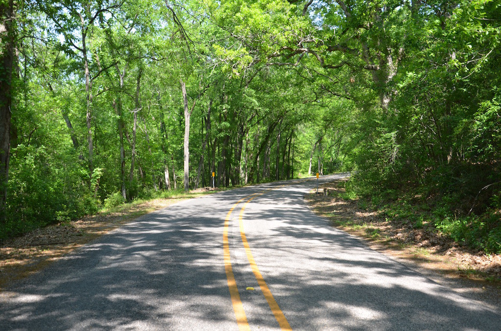 The scenic road into the park