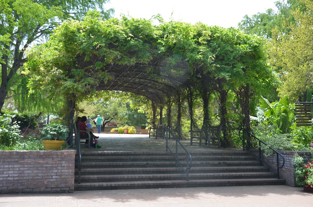 I didn't bother taking a picture of this Wisteria arbor before; it was bare!