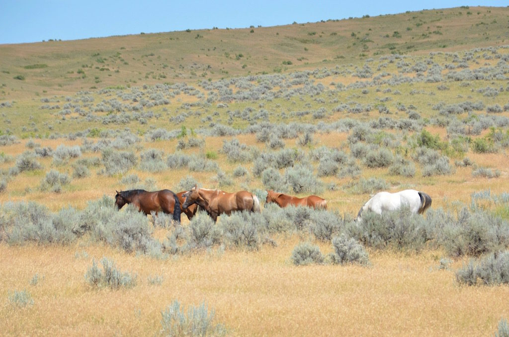 The remaining ancestors still live here. These are their wild horses.