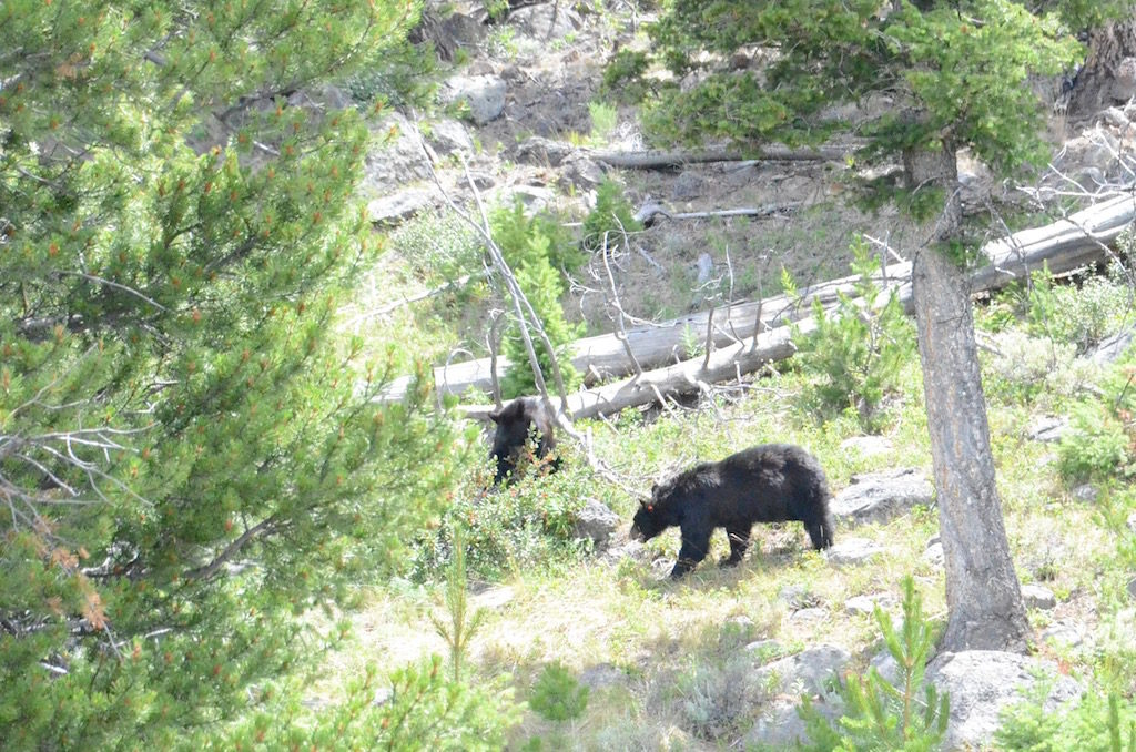 Jan was able to get a glimpse of a couple of black bears as I drove.