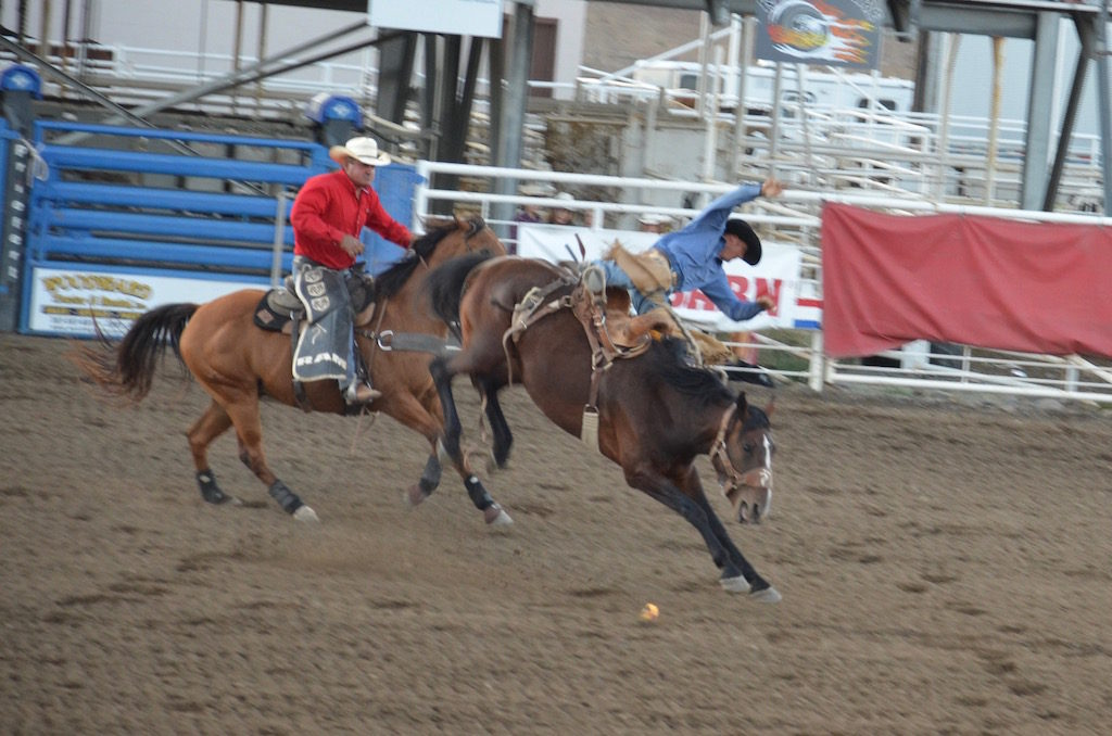 They had bucking broncos as well as bulls and cows for the younger riders.