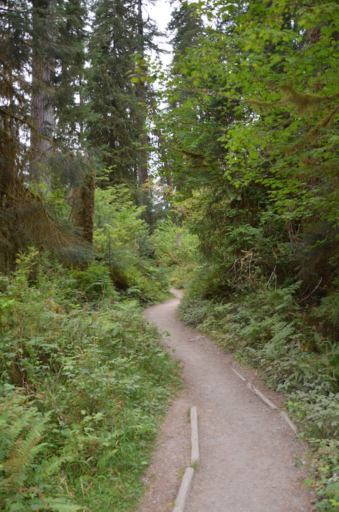 We went on a short hike on this trail; there was word of an Elk sighted close by.