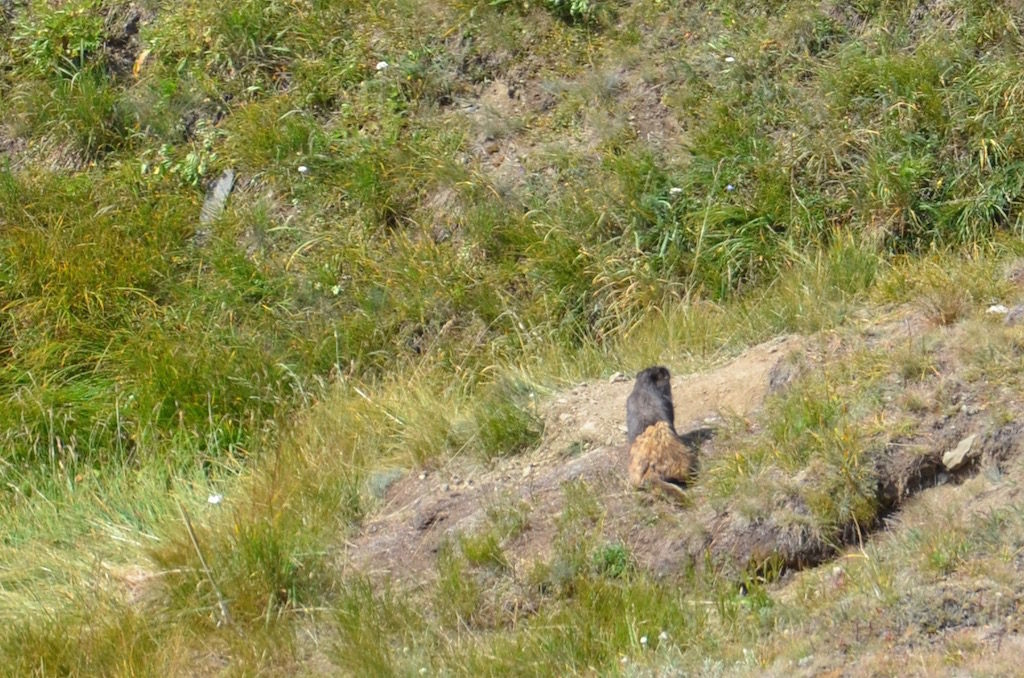 We spotted this Marmot near the Visitor's Center.