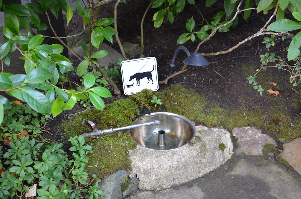 Very pet friendly; they even had these doggy drinking fountains !