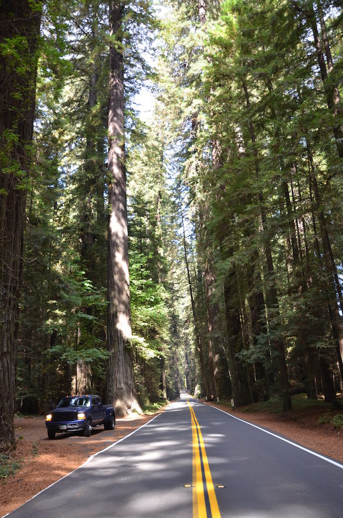 More views of the Avenue of the Giants